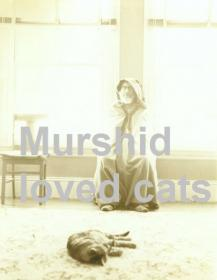 Murshid and the cat